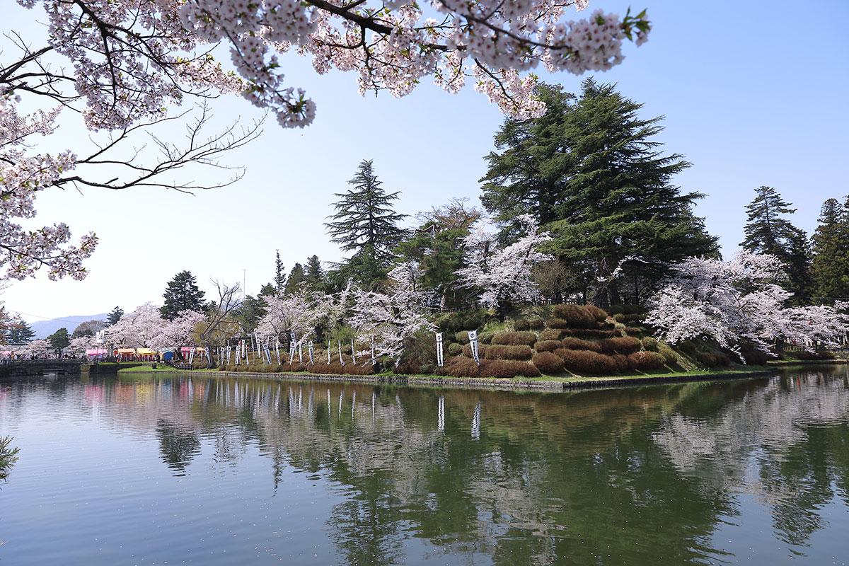 米沢城址の桜
